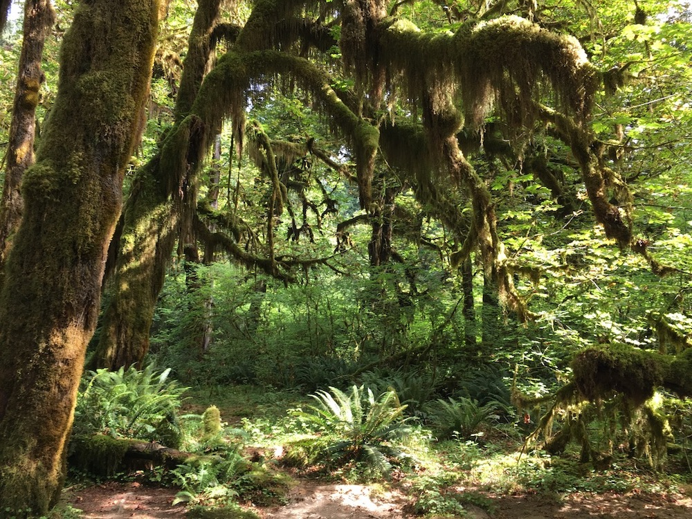 Voorbeeldroute Seattle - San Francisco - Hoh Rainforest