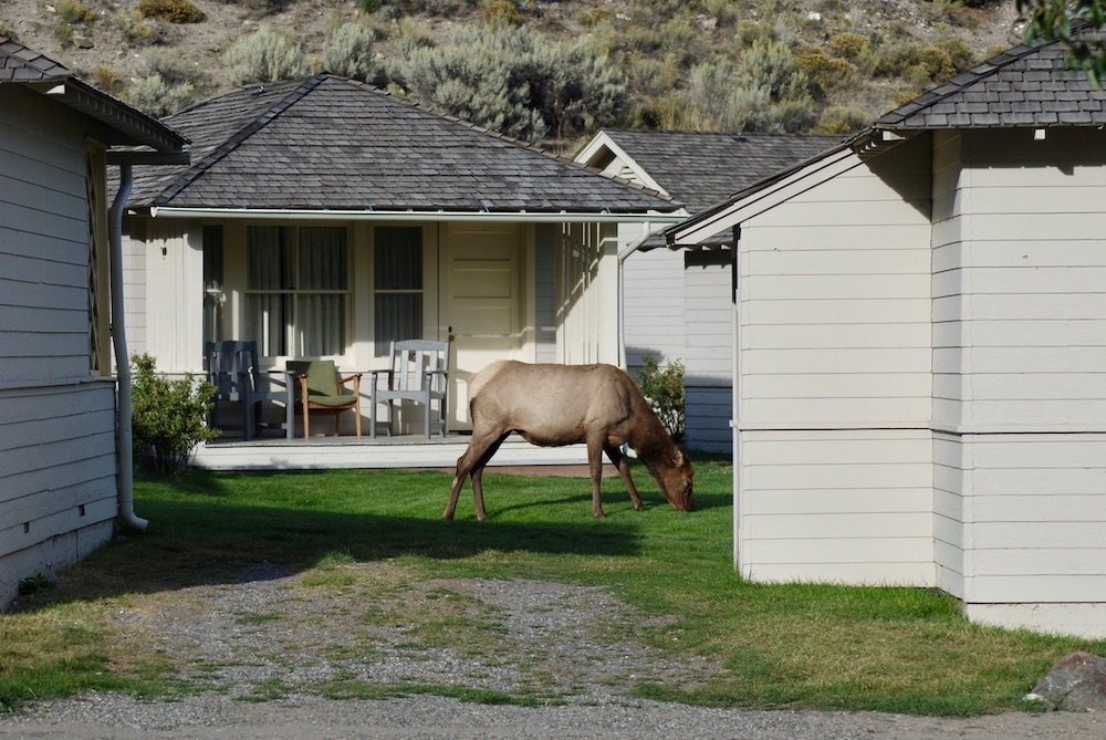 Bijzondere Accommodaties in Amerika - Mammoth Hotsprings Cabins